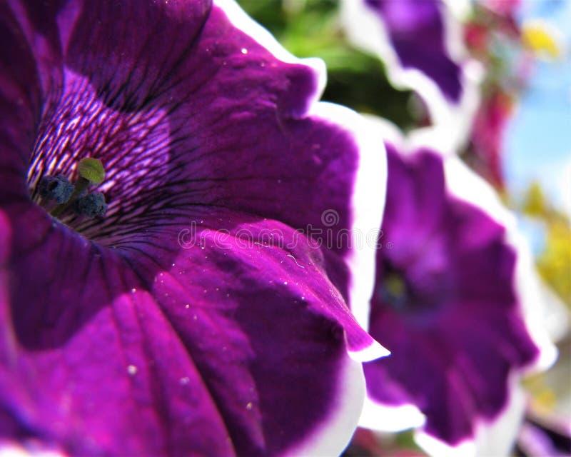 Blommanärbild 03 royaltyfri foto