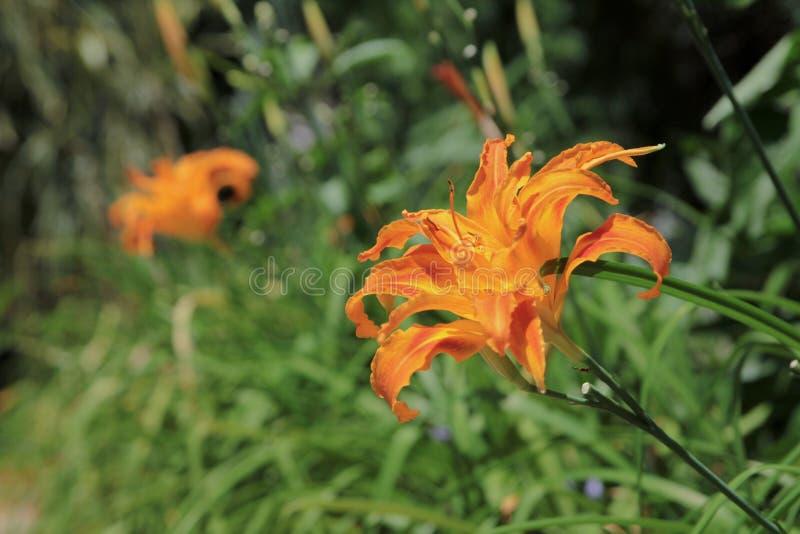Blomman är skönheten av naturen royaltyfri fotografi