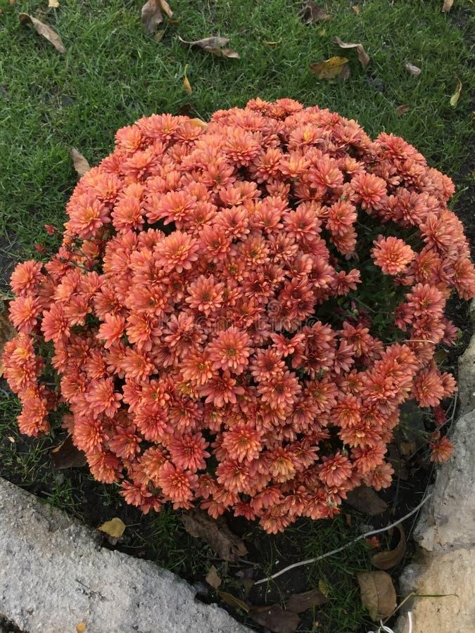Blomman av liv royaltyfria foton