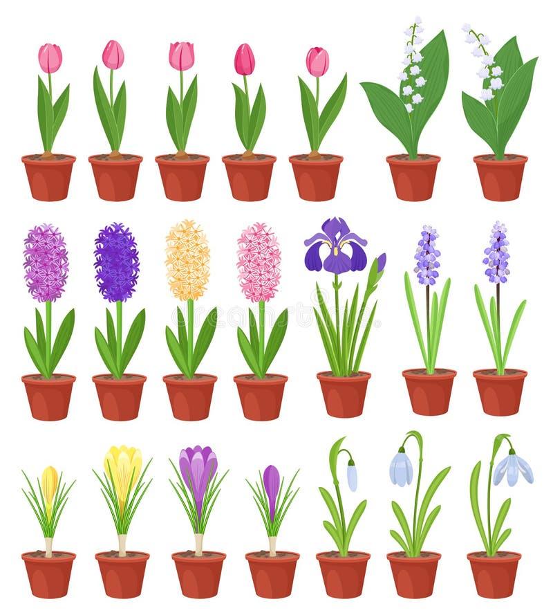blomman blommar krukafjädern Iriers, liljor av dalen, tulpan, narcissuses, krokusar och andra primulor Trädgård vektor illustrationer