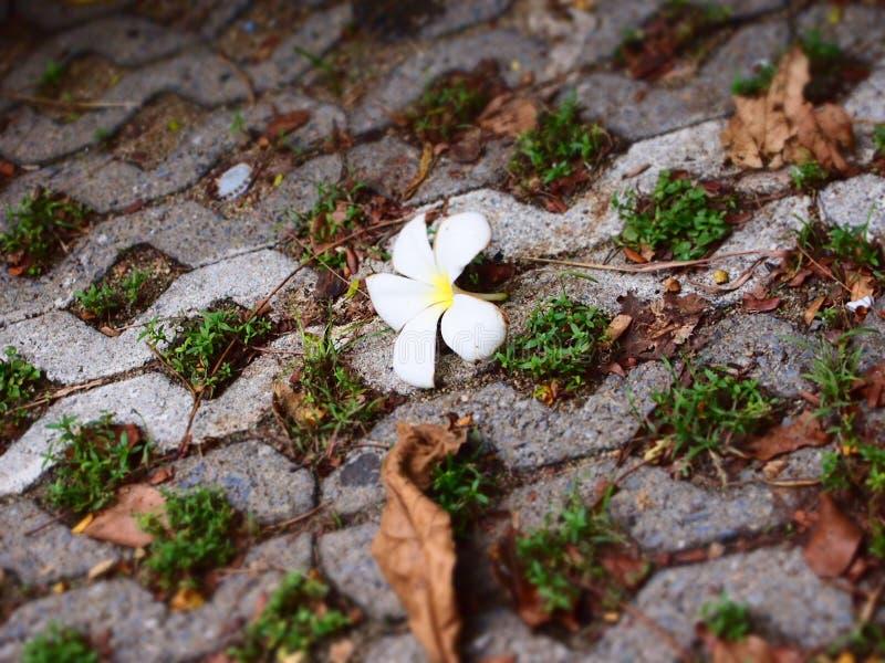Blomman för vissnaLAN-thom och flera sidor ligger på tegelstenjordningen royaltyfri fotografi