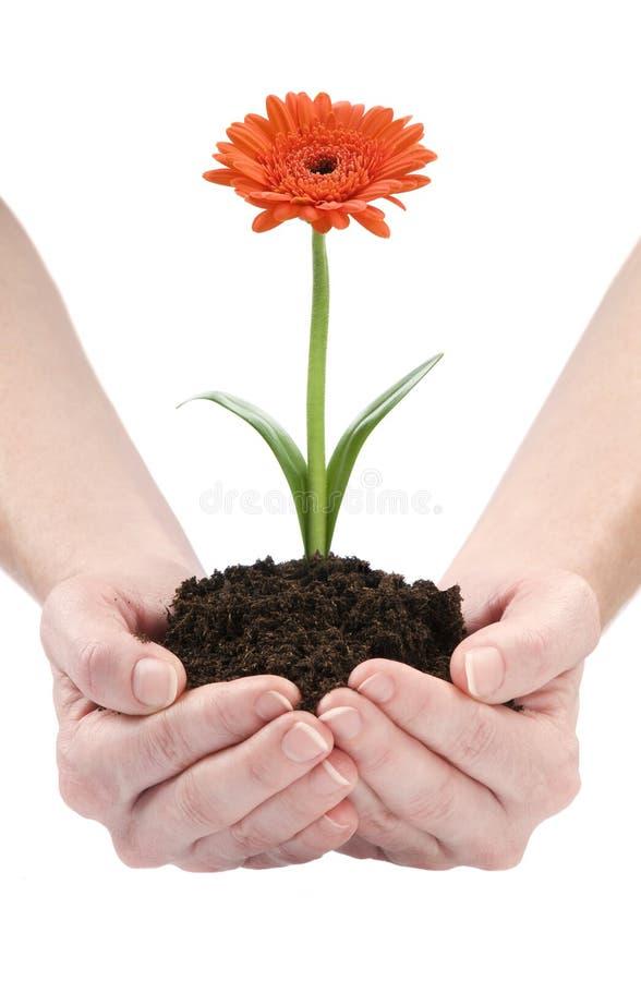 blomman hands humanen royaltyfria bilder