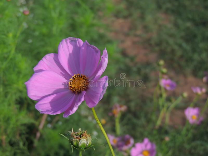 Blomman och vinden royaltyfri fotografi