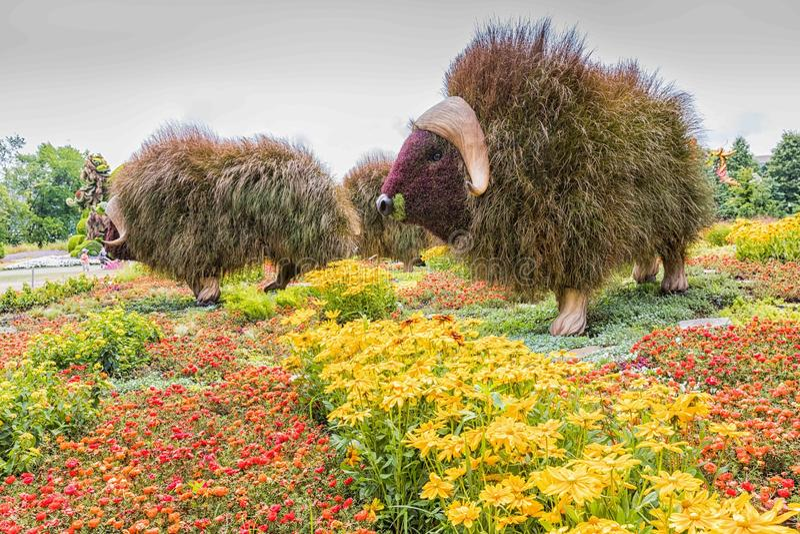 Blomman parkerar in arkivfoton