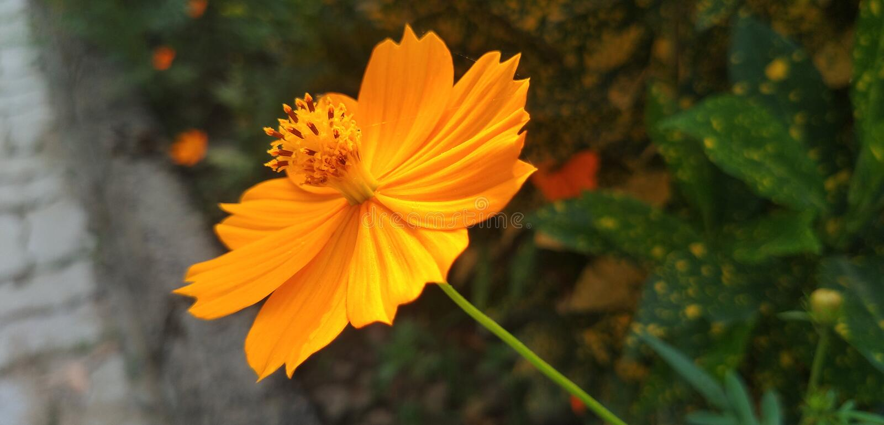 Blomman väntar på bin arkivfoton