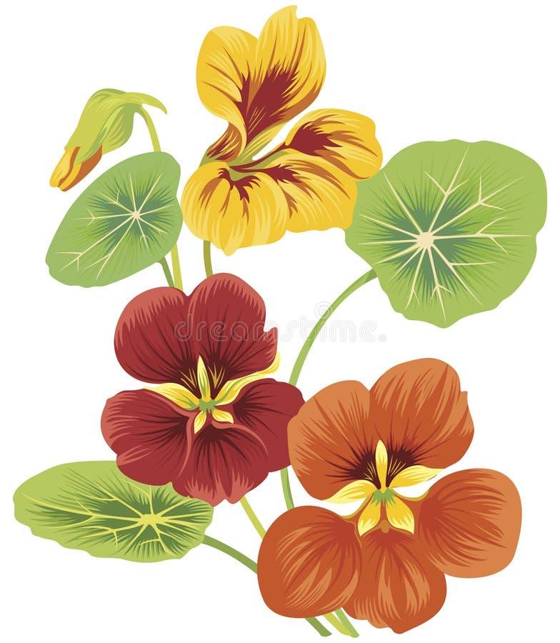 blommanasturtium royaltyfri illustrationer