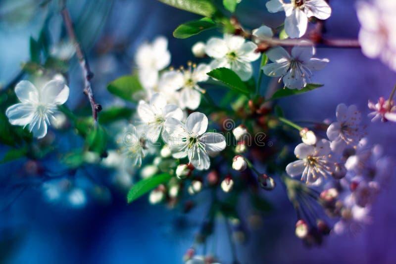Blommande äppleträd med färgrik bakgrund arkivbilder