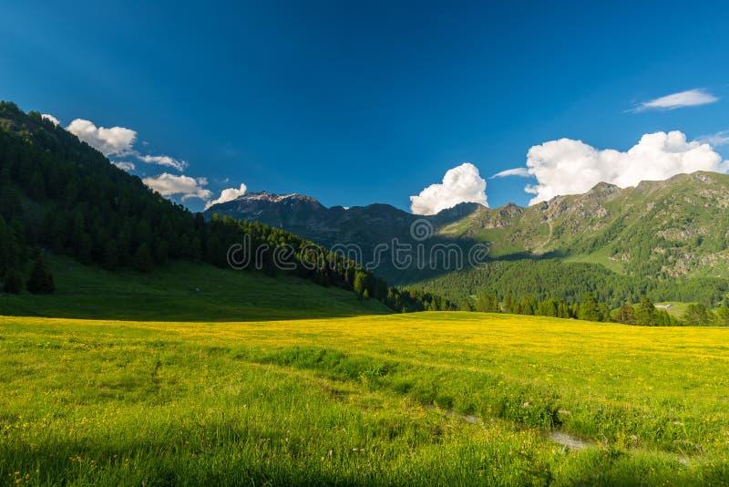 Blommande alpin äng och frodig grön skogsmark arkivbild