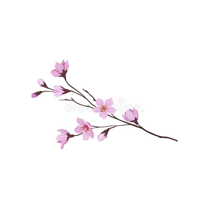 Blommande filial av det sakura trädet Fatta med små rosa blommor Natur- och floratema Detaljerad plan vektordesign stock illustrationer