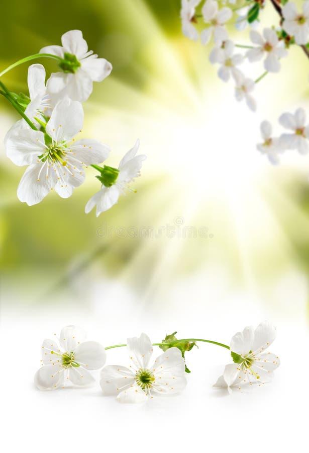 Blommande filial mot den blåa himlen royaltyfri foto