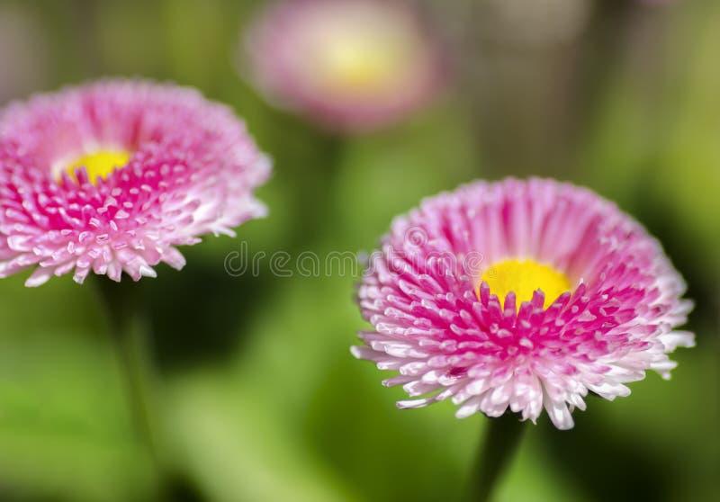 Blommande grunt djup för blommor av fältet arkivfoton