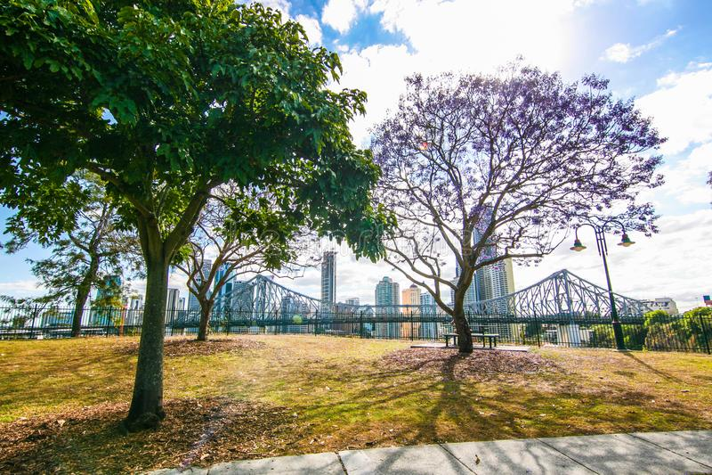 Blommande jakaranda i Brisbane Australien royaltyfri fotografi