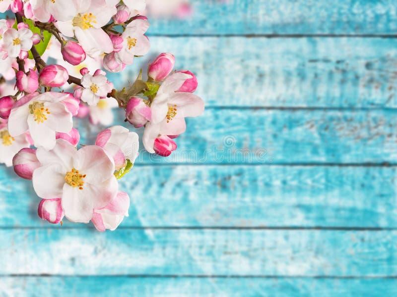 Blommande körsbärsröda blomningar med gamla träplankor royaltyfria bilder