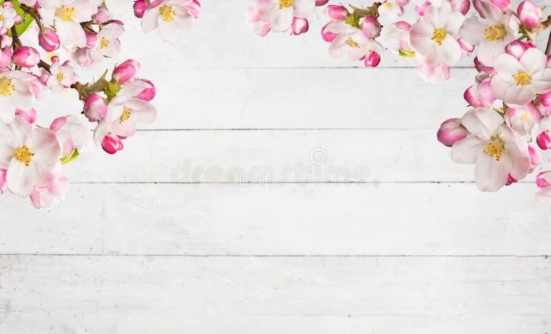 Blommande körsbärsröda blomningar med gamla träplankor royaltyfri bild