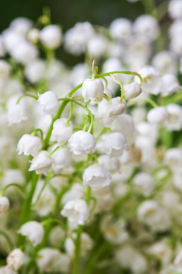Blommande liljekonvalj i vårträdgård med den grunda fokusen arkivbilder