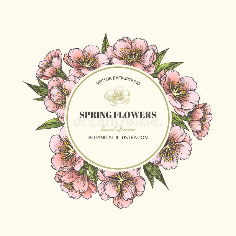 Blommande mandel den blom- bakgrundsdesignen använder idealt den din vektorn stock illustrationer
