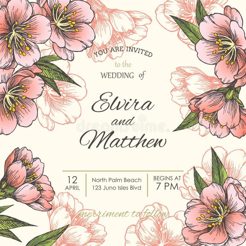 Blommande mandel den blom- bakgrundsdesignen använder idealt den din vektorn royaltyfri illustrationer