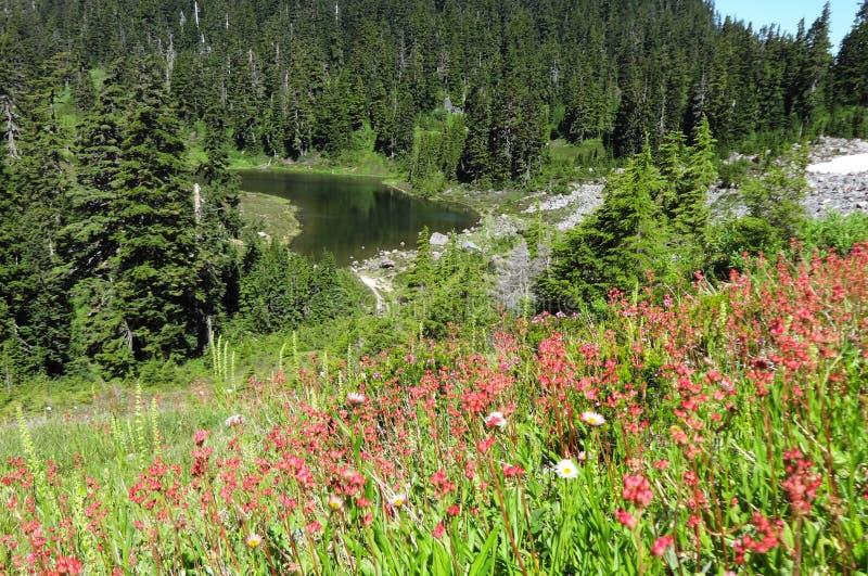 Blommande near Mazama för vildblommor sjö royaltyfri foto