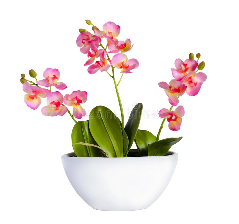 Blommande orkidéväxt i keramisk blomkruka royaltyfri bild