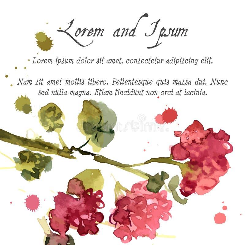 Blommande pelargon för vattenfärg stock illustrationer