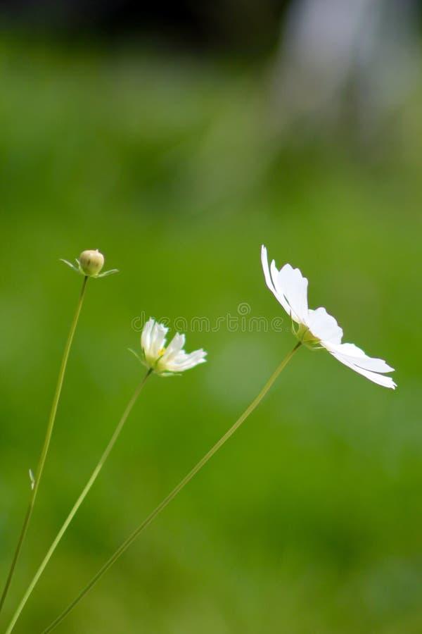 Blommande process arkivbilder