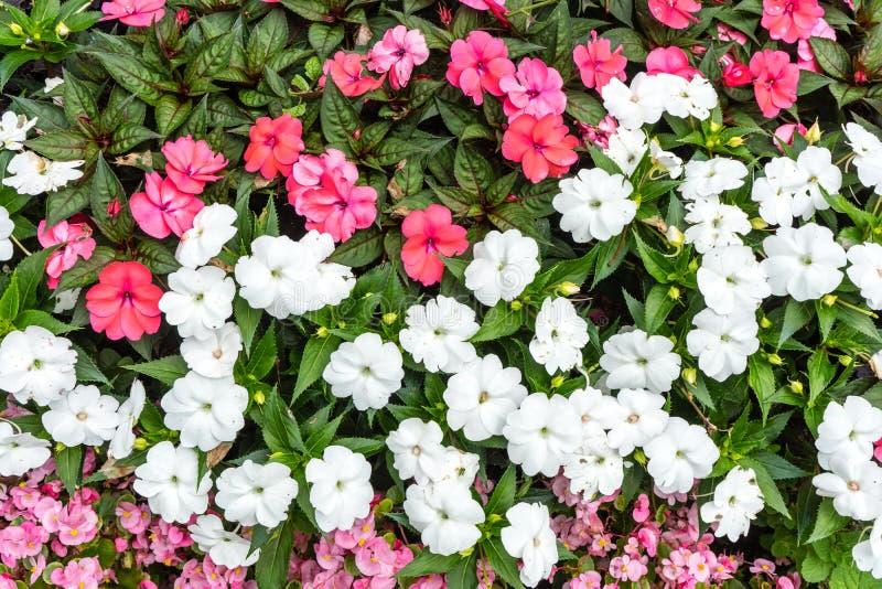 Blommande sammansättning för röd vit rosa färgblommabukett arkivbilder