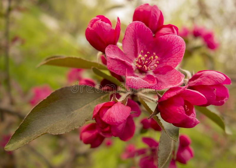 Blommande träd i vår i parkera arkivbilder