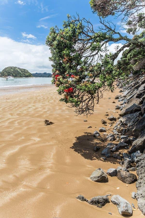 Blommande träd på en strand royaltyfri bild