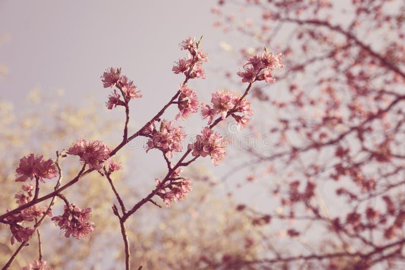 Blommande träd på fält i vår i skogen arkivfoton