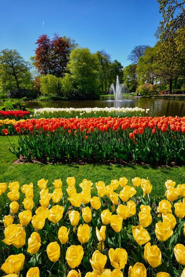 Blommande tulpanblomsterrabatt i den Keukenhof blommaträdgården, Netherland royaltyfria foton