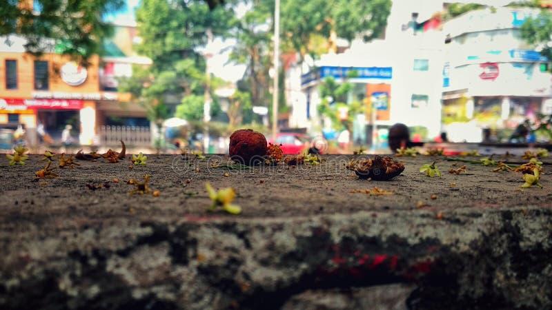 Blommanedgång fotografering för bildbyråer