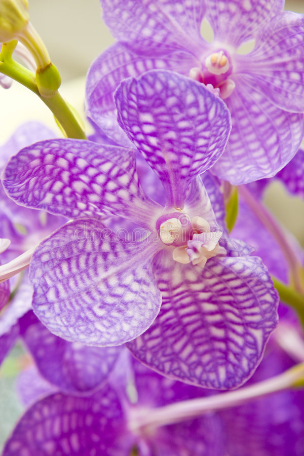 blommaorchid royaltyfri bild