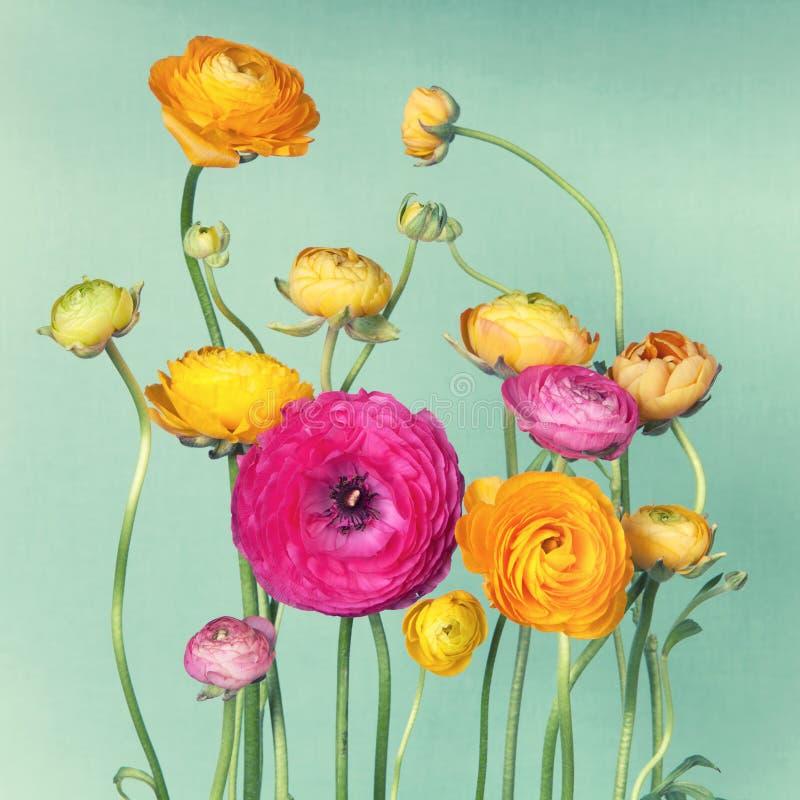 Blommaordning av ranunculuson royaltyfri fotografi