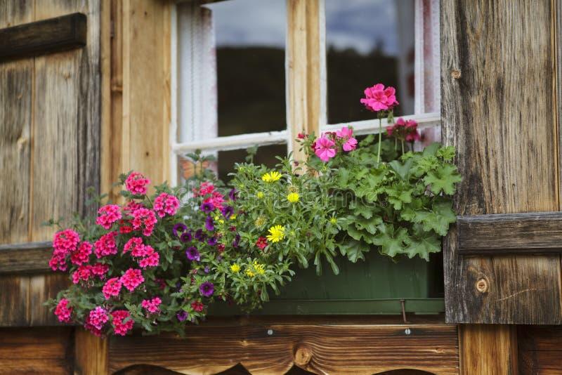 Download Blommaordningar fotografering för bildbyråer. Bild av vandring - 27286231