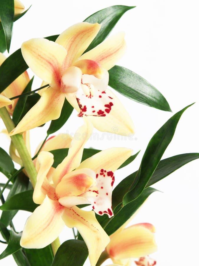 blommaorenge royaltyfria bilder