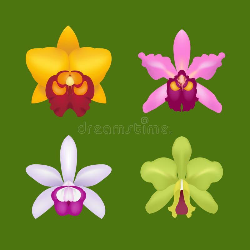 Blommaorkidé också vektor för coreldrawillustration vektor illustrationer