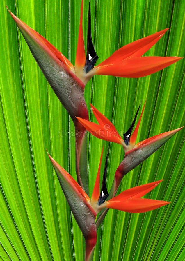 Blommaparadis Arkivbilder