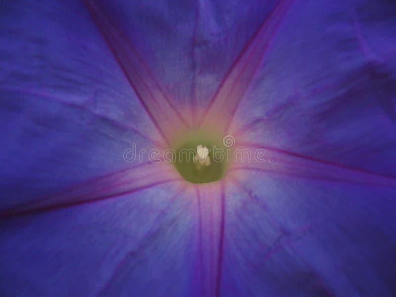 blommaperuan arkivbild