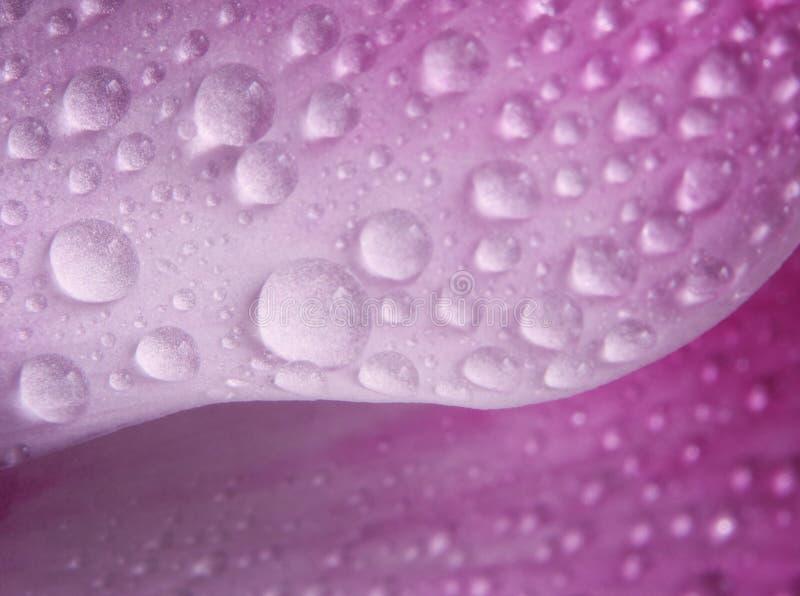 blommapetal fotografering för bildbyråer
