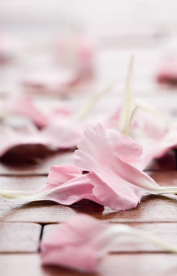 blommapetalspink royaltyfri foto