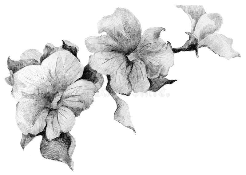 Blommapetunian skissar buketten royaltyfri illustrationer