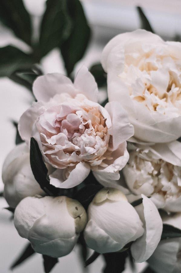 Blommapioner på bakgrunden arkivfoto