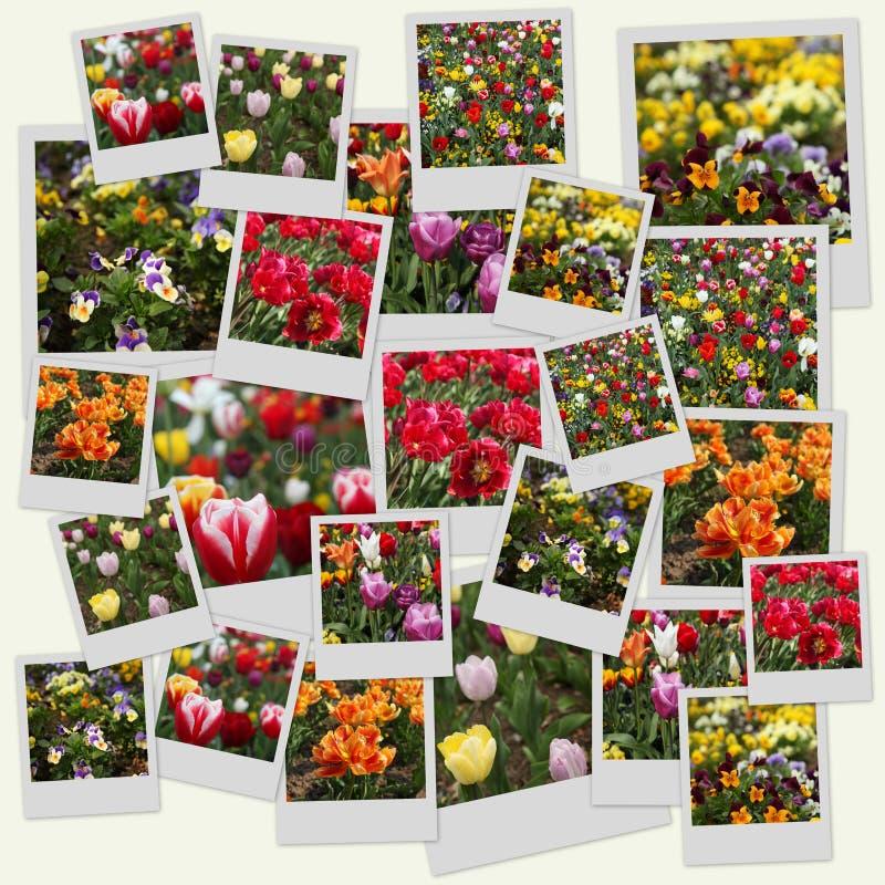 blommapolaroids stock illustrationer