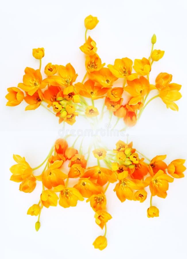 blommaprydnadyellow arkivfoton
