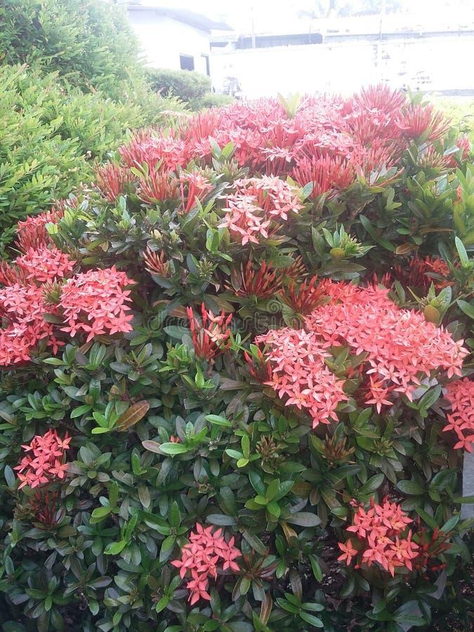 Blommar banch arkivfoto