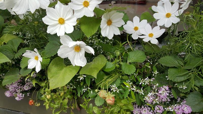 Blommar dag royaltyfri foto