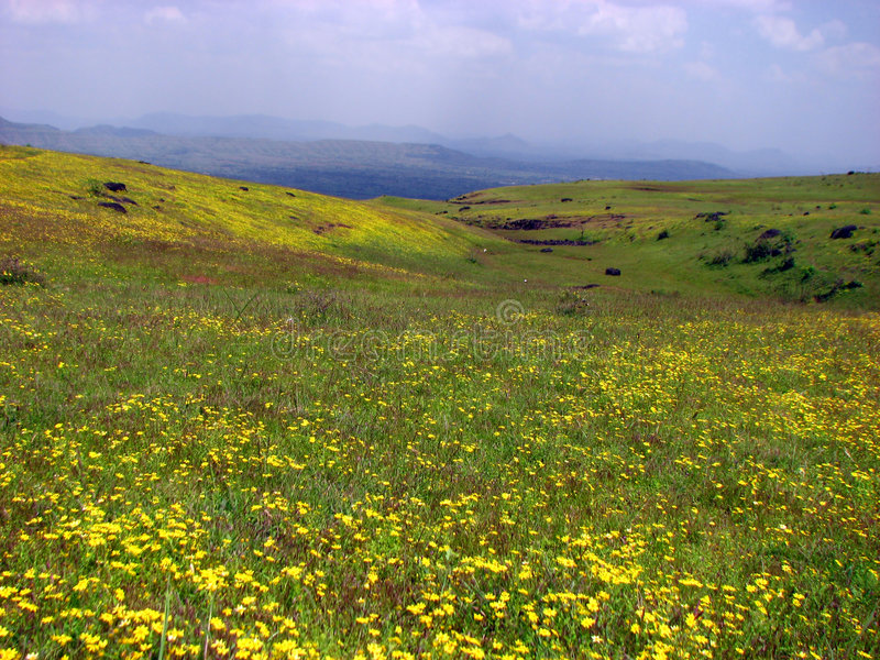 blommar dalen royaltyfri bild