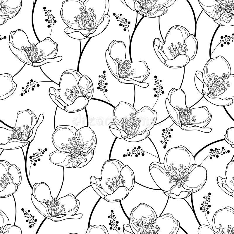 Blommar den sömlösa modellen för vektorn med översiktsjasmin i svart på den vita bakgrunden Blom- bakgrund för elegans med jasmin vektor illustrationer