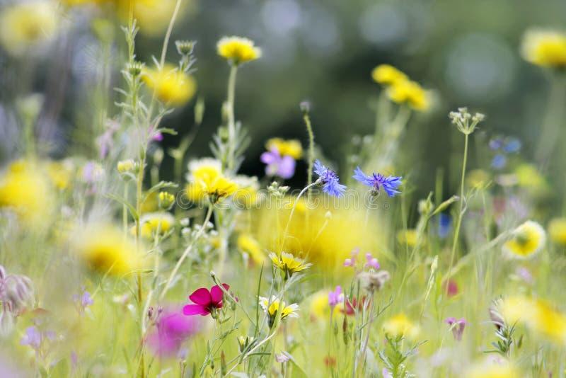 blommar den wild ängen royaltyfri foto