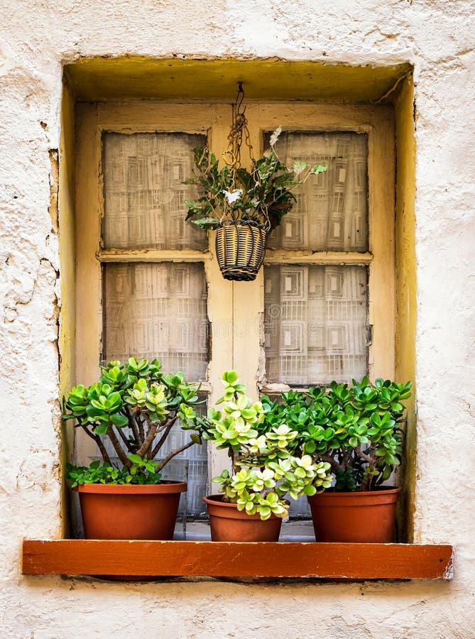 blommar det gammala fönstret royaltyfria bilder